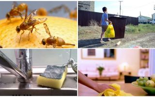 איך להיפטר זבובים קטנים בדירה