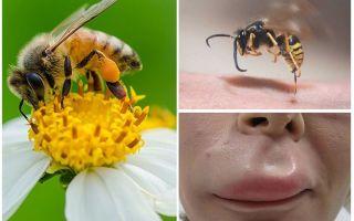מה לעשות אם דבורה קצת בשפת