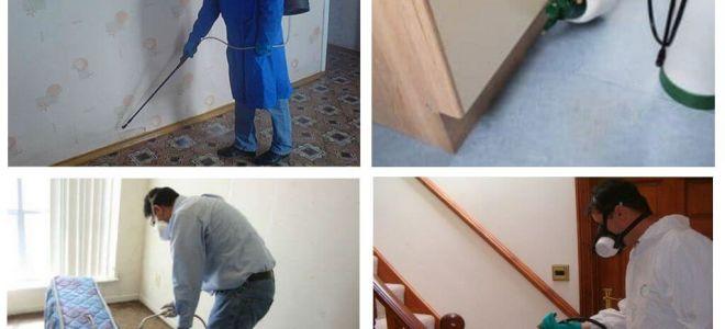 זיהום פרעושים בדירה על ידי שירותים מקצועיים