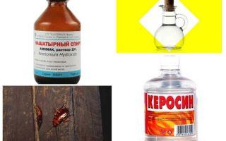תרופות פולק היעיל ביותר עבור ג'וקים