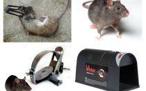 מלכודות עכברים