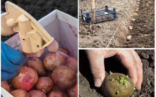 מלפני שתילה לעבד תפוחי אדמה מן החיפושית תפוחי אדמה קולורדו תולעת