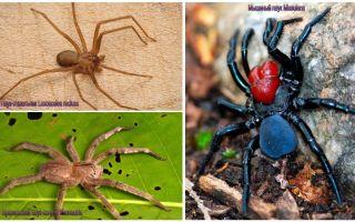 תיאור ותמונות של העכבישים המסוכנים ביותר בעולם