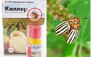 Remedy Killer עבור חיפושית תפוחי אדמה קולורדו