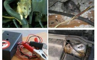 איך להיפטר עכברושים מתחת למכסה המנוע של מכונית