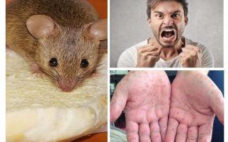 מה יכול להיות נגוע עכברים