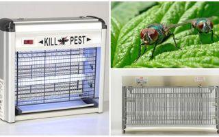 איך לעשות מלכודת זבובים בבית