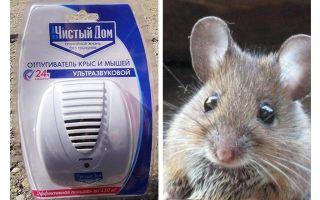Ultrasonic repeller מ חולדות ועכברים בית נקי