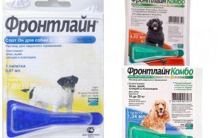 טיפות חזית מ פרעושים לכלבים
