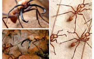הנמלים המסוכנות ביותר בעולם
