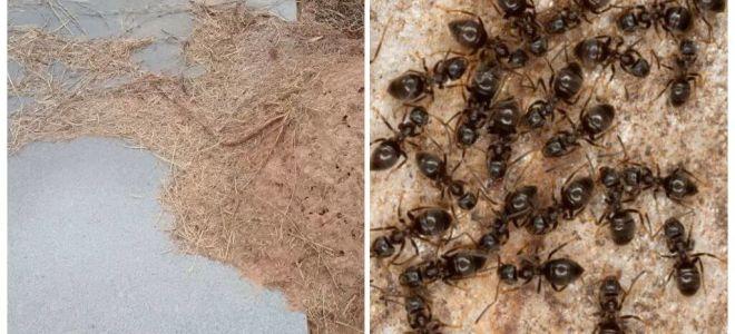 איך להיפטר נמלים על הקבר