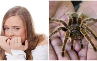 מה שמו של פחד מעכבישים (פוביה) ושיטות טיפול