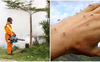אמצעי לעיבוד שטח מי יתושים וקרציות