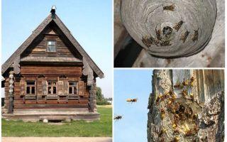 איך להוציא את הדבורים מתוך בית העץ ומקומות אחרים