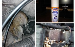 עכברוש תרסיסים למכונית