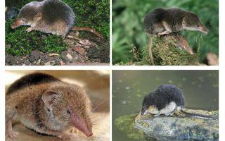 זחילה של עכבר