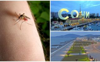 האם יש יתושים בסוצ'י ובאדלר