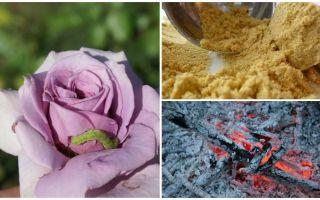 איך ורדים ורדים זחלים כנימות