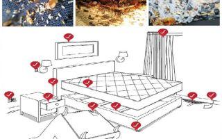 איך להתמודד באופן עצמאי עם פשפשים בדירה