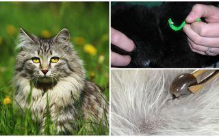 כיצד להסיר סימני חתול או חתול