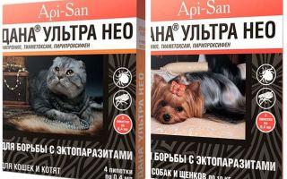 דנה אולטרה ניאו נופלת מפרעושים לחתולים ולכלבים