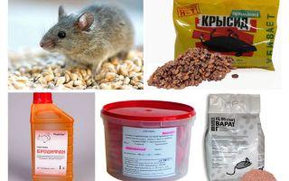 האמצעים הטובים ביותר של עכברים