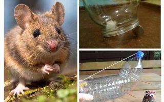 איך לתפוס עכבר בבית ללא מלכודת עכברים
