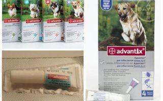 טיפות Advantiks מ פרעושים לכלבים