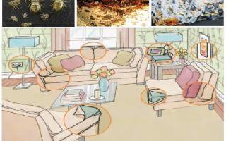 מה ואיך להרעיל באגים בבית