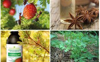 איך להתמודד עם נמלים תותים