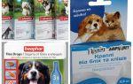 תרופות פרעושים ותסמינים לכלבים