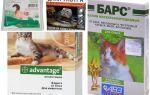 טיפות על פרקי פרעושים לחתולים וחתולים
