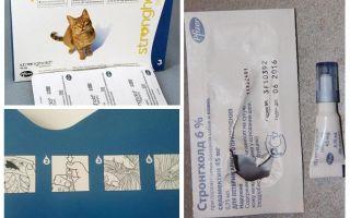 טיפות הכי טוב על חתולים עבור פרעושים ותולעים