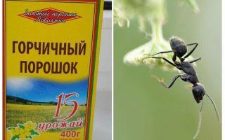 אבקת חרדל מנמלים ותנומות בגינה