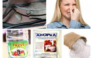 איך להיפטר ריח של עכברים