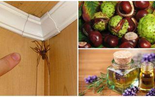 שיטות וכלים עבור עכבישים בדירה או בבית פרטי