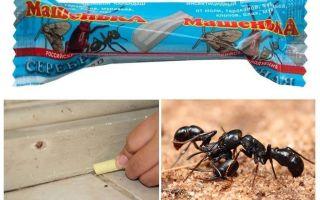עיפרון מאשה מנמלים