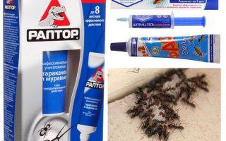 המוצרים הנמלים הטובים ביותר