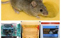 רעל מעכברים