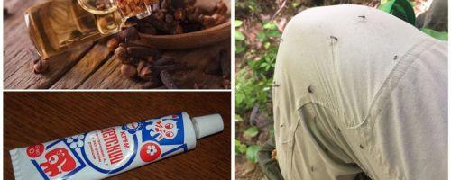 תרופות עממיות עבור יתושים