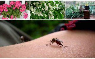 איך להתמודד עם יתושים בדירה או בבית