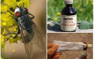 תרופה עבור gadflies וזבובים עבור בני אדם