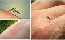 למה יתושים לנשוך כמה אנשים יותר מאחרים