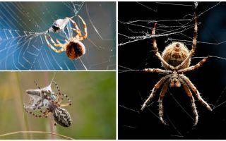 כמו עכביש טווה האינטרנט