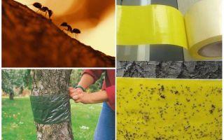 איך להתמודד עם נמלים בעצים בגינה