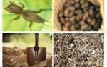 מה ואיך להביא את מדבדקה מן הגן