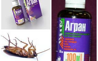אגרן תרופה עבור תיקנים