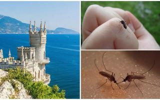 האם יש יתושים בקרים