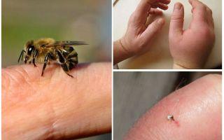 מהו עקיצת דבורה שימושי עבור אדם?