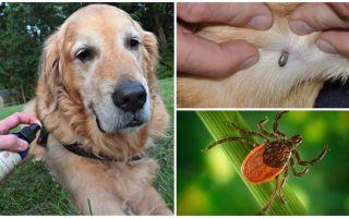 תרסיסים לכלבים נגד קרציות ופרעושים